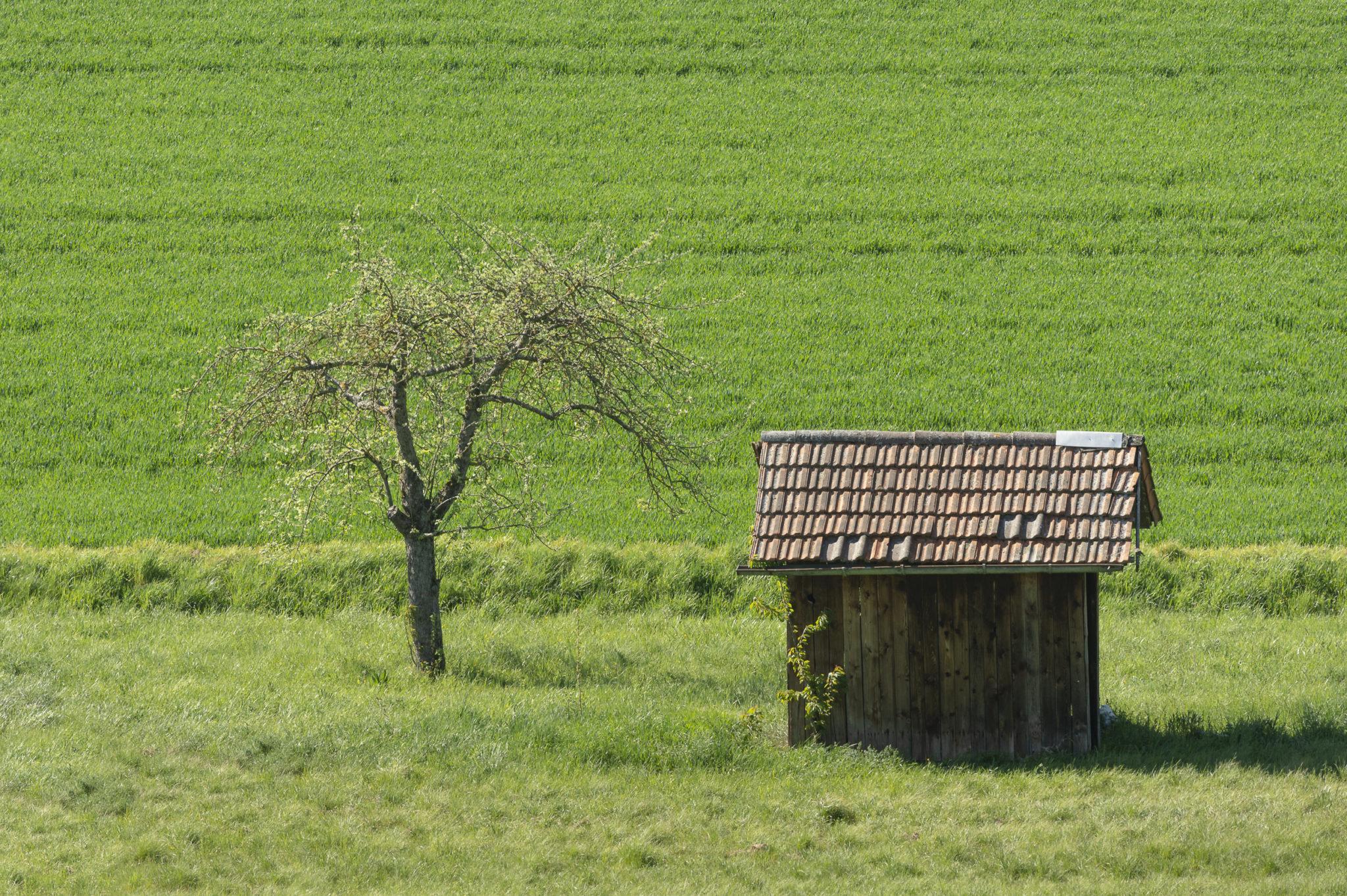 Frühlingsgrün im Kraichgau