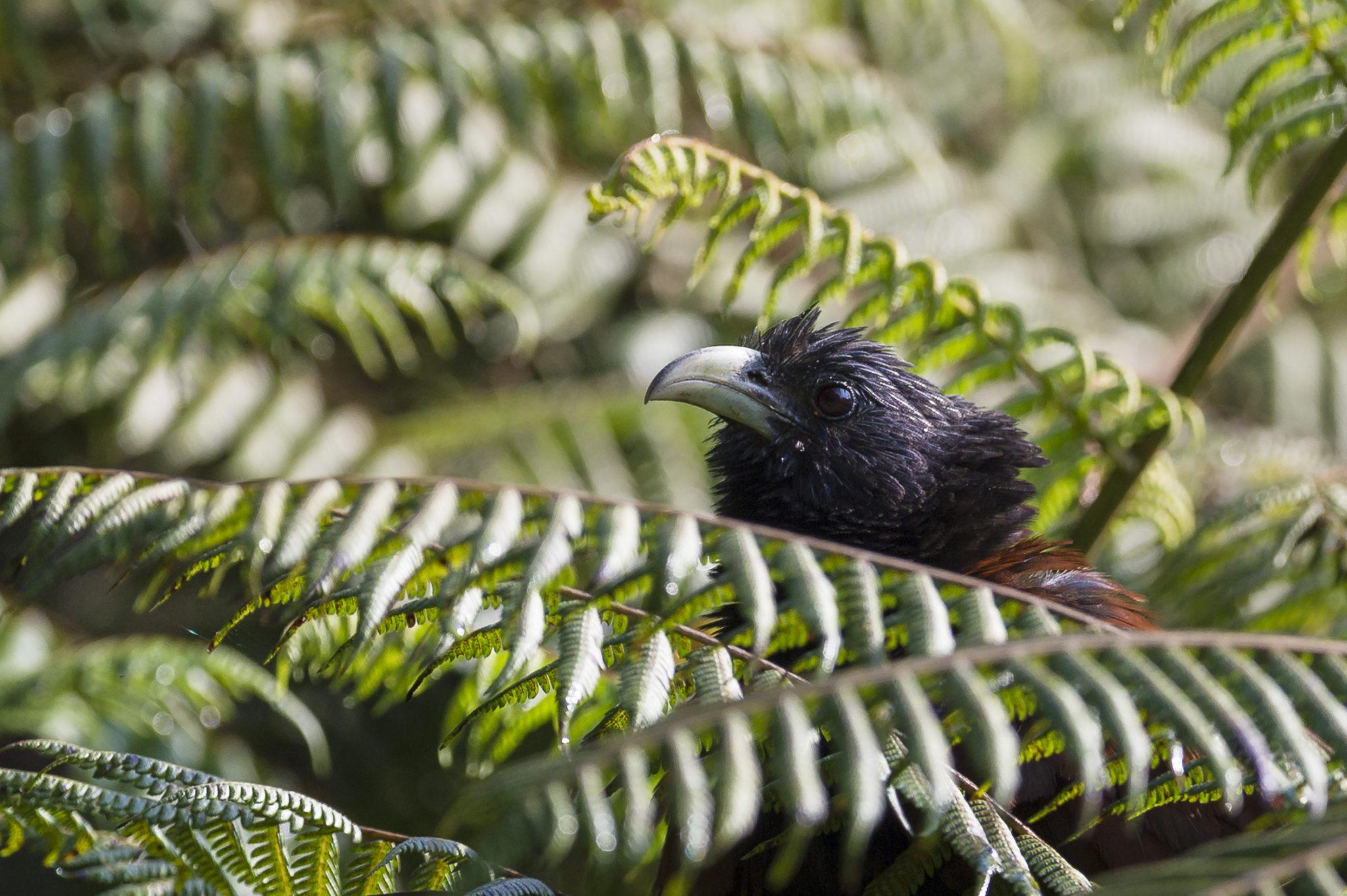 Naturfotografie Olaf & Sylvia Rentzsch