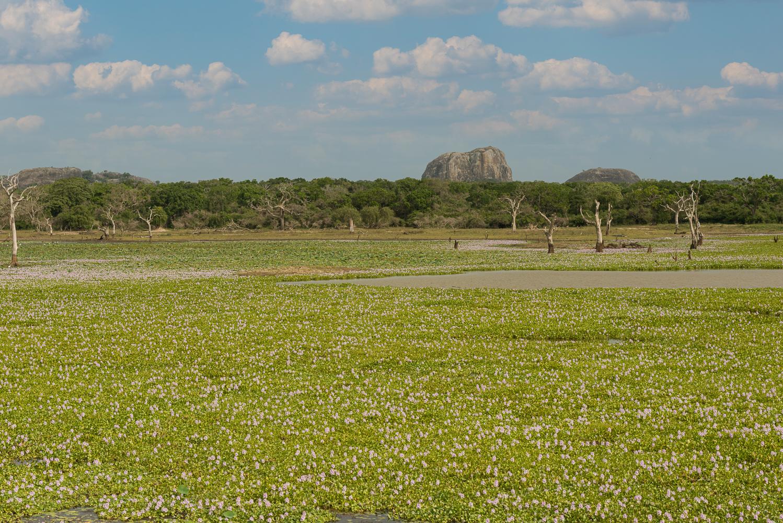 Blick über den Yala Nationalpark in Sri Lanka